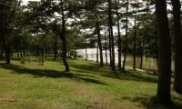 Đồi thông hai mộ bên Hồ Than Thở