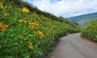Địa điểm ngắm hoa Dã quỳ Đà Lạt đẹp nhất