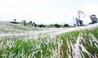 Ngọn đồi cỏ tranh trắng trắng xoá đẹp tuyệt ở Đà Lạt